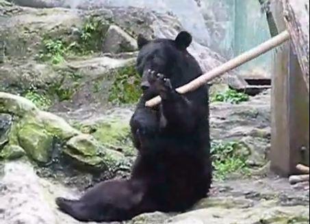 Orso che pratica Kung Fu