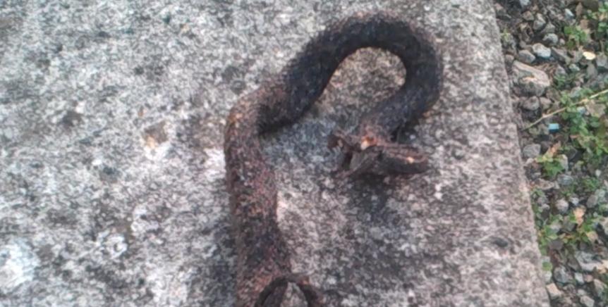 Incendio: carbonizzata la fauna / VIDEO VIPERA CARBONIZZATA