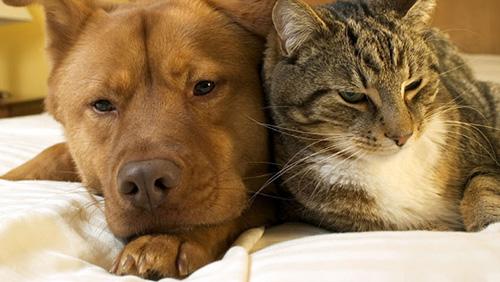 La dieta dei cani e dei gatti durante le feste