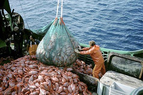 """""""Blue day"""", 1 miliardo di euro per il settore della pesca"""