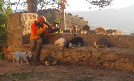 I giapponesi fotografano i gatti gangitani