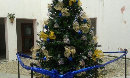 Cefalù, gattino rimane intrappolato sull'albero di Natale: subito la task force di Lapunzina