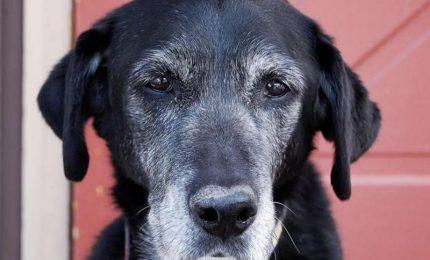 Adottare un cane anziano, una scelta di cuore con tanti vantaggi