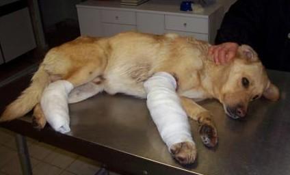 Animali smarriti o feriti, che cosa fare?