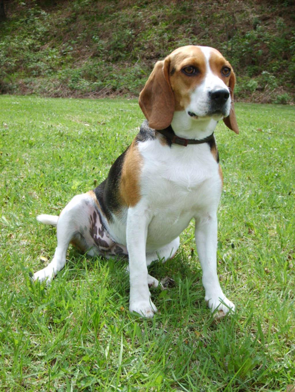 Il linguaggio del corpo canino: I segnali calmanti
