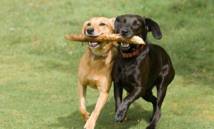 Il linguaggio canino: un corpo che parla