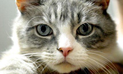 I gatti domestici e le loro esigenze