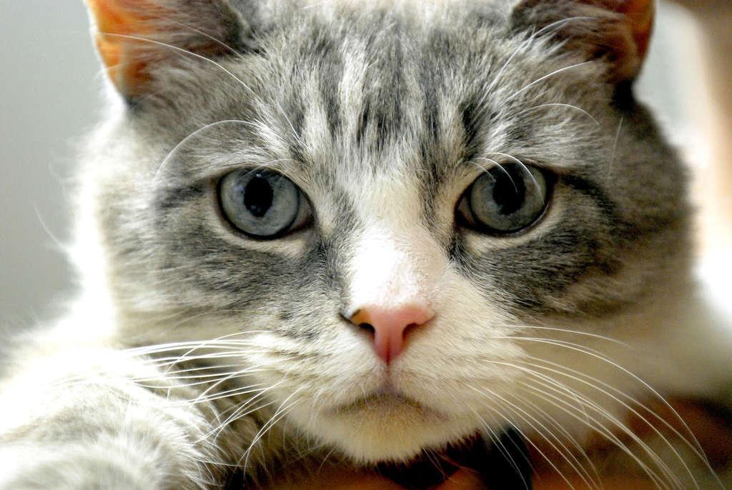 perdita improvvisa di peso nei gatti