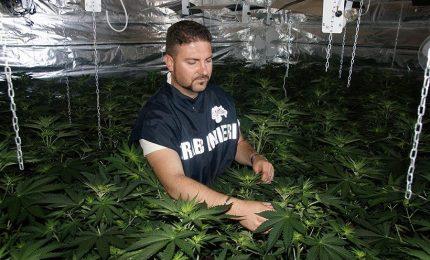 """Tre arresti in seguito alla scoperta di una piantagione di """"Cannabis Indica""""."""