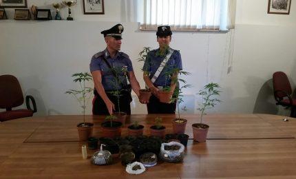 Cefalù: scoperta piantagione di marijuana, arrestato 26enne