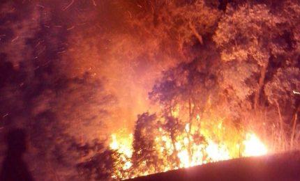 Le immagini dell'incendio di questa notte