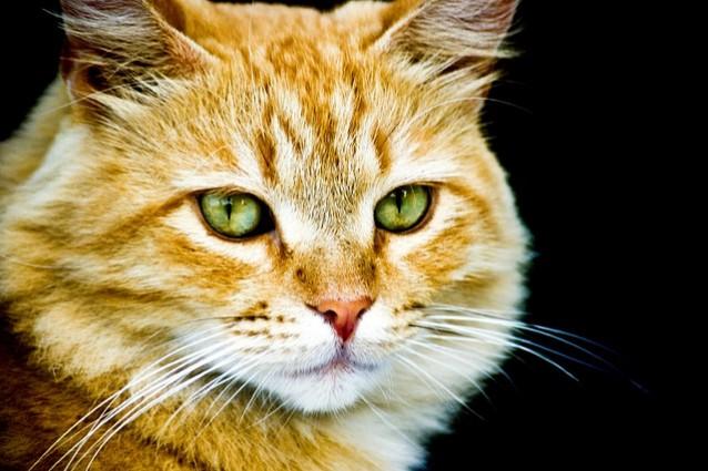 Concorso fotografico sui gatti a Termini Imerese