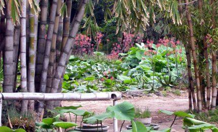 La Macchina dei Sogni all' orto botanico