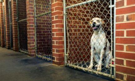 Cani randagi: adozioni in Italia e all'estero grazie alle Guardie Ambientali