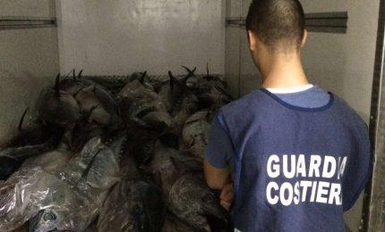 Maxi sequestro di tonno da parte della Guardia Costiera di Palermo