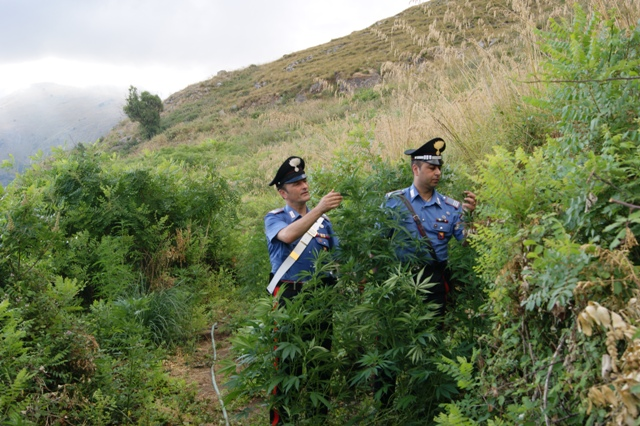 Partinico, 41enne arrestato per coltivazione di cannabis e furto di energia elettrica