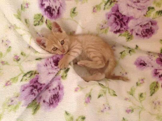 Gattino cerca casa