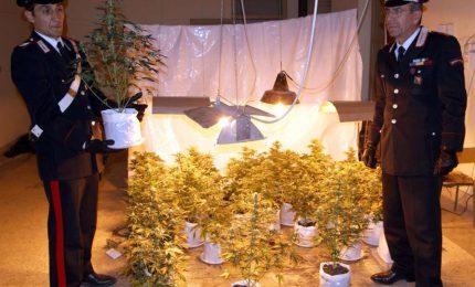 Palermo. Scoperta una piantagione di Marijuana in un ex convento