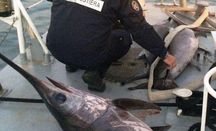Maxi sequestro di pesce spada a Palermo