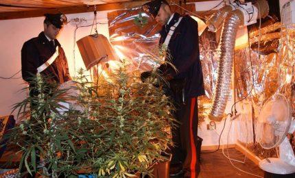 Cannabis affare in famiglia
