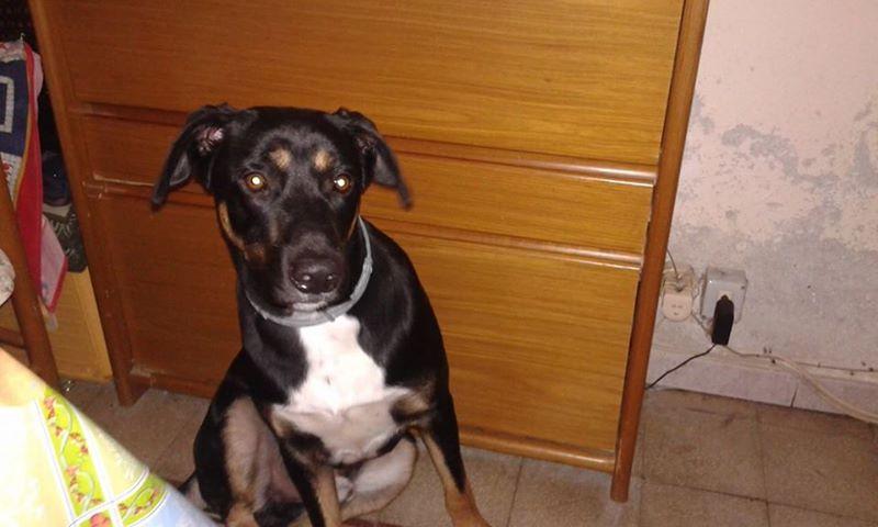 Smarrito cane sul lungomare di Cefalù