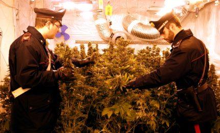 Piantagione di cannabis in una villa abbandonata, due giovani nei guai