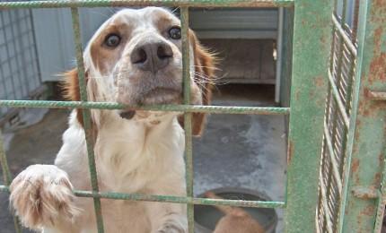Giovane denunciato per l'abbandono di un cane