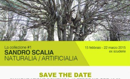 """Museo civico di Castelbuono, dal 15 febbraio """"Naturalia/Artificialia"""""""