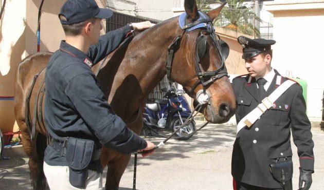 Blitz delle Forze dell'Ordine contro le corse clandestine di cavalli