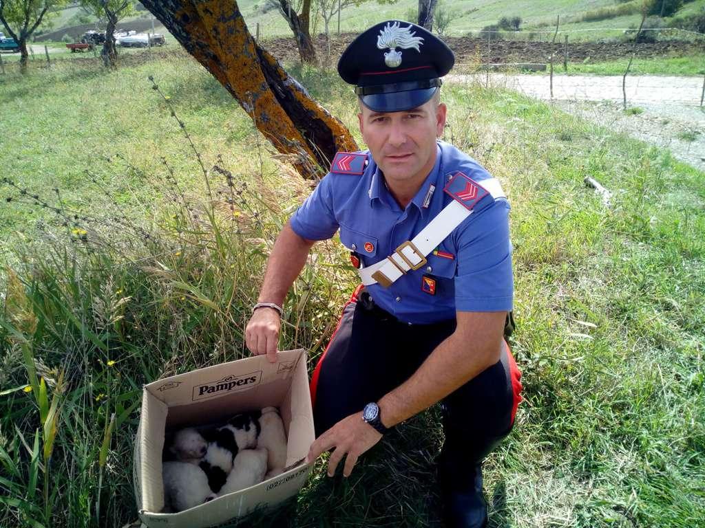 Petralia Soprana, cuccioli abbandonati salvati dai Carabinieri