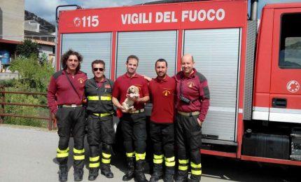 Petralia Soprana: salvato cagnolino caduto nel fiume Salso