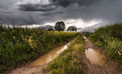 Maltempo, gravi danni all'agricoltura in tutta la provincia