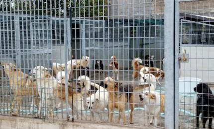 Canile di Palermo, tra animalisti ed atti vandalici