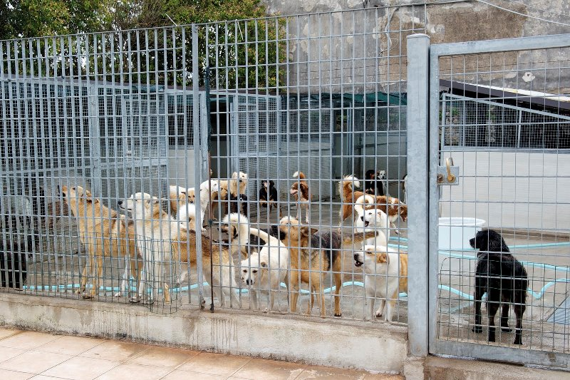 Progetto in favore dei cani di proprietà del comune di Palermo