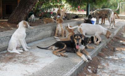 Polizzi: contributi per l'adozione di cani randagi