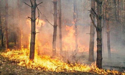 Rischio incendi: raddoppiati i turni dei volontari della Protezione Civile a Termini Imerese