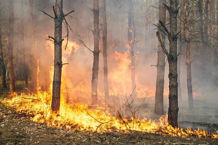 Prevenzione incendi: mancano fondi e volontà