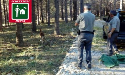 Il Corpo Forestale di Polizzi rimette in libertà un daino