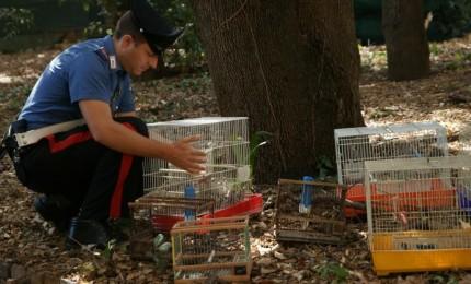 Traffico illecito di fauna selvatica, sequestrati 62 volatili