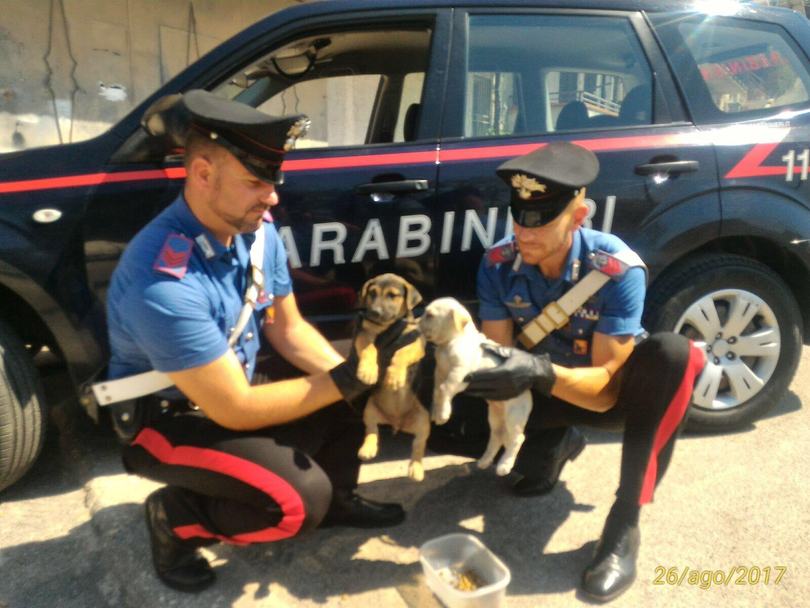 I carabinieri salvano due cani abbandonati dentro un furgone