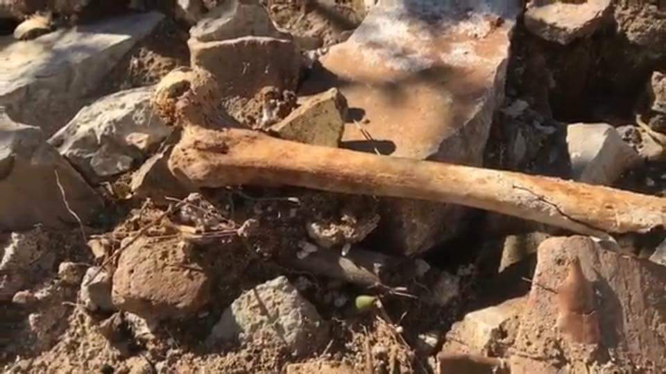 villa palmieri resti umani