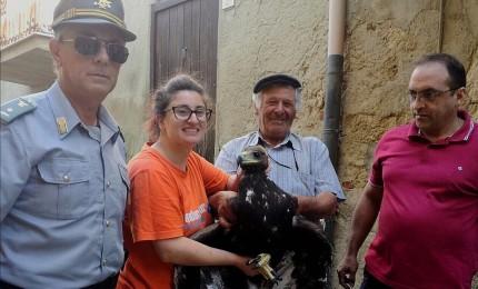 Alimena: aquilotto ferito soccorso da un pastore