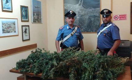 Maxi piantagione indoor, sequestro dei Carabinieri