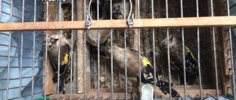Fauna protetta venduta illegalmente, sequestrata e poi reintrodotta in natura