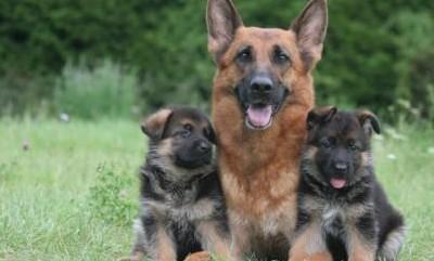 Possedere un cane fa bene al cuore e allunga la vita