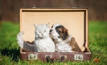 Amici a 4 zampe: quando in casa arriva un cucciolo