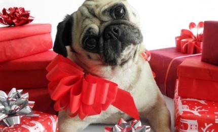 Regalare un cucciolo a Natale? Ripensiamoci
