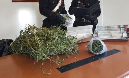 25 piante di cannabis in casa, tre gli arresti