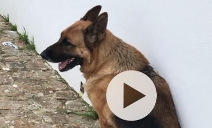 Cefalù, smarrito cane a Campella