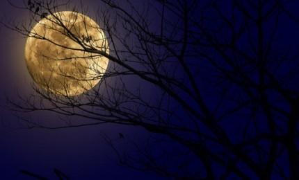 Imperdibile Superluna, questa sera il satellite vicinissimo alla Terra